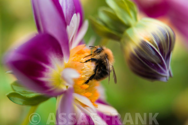 Bee photos