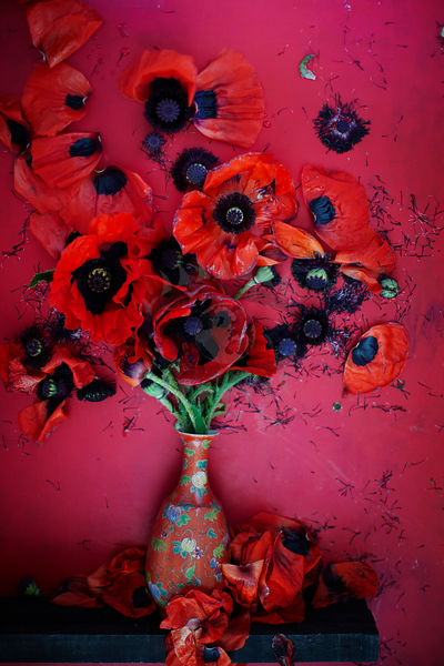 Poppies Photos