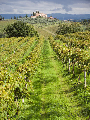 San_Gimignano_Vineyard_03