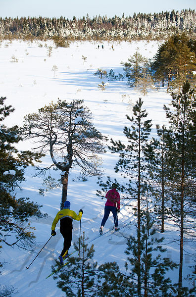 Public Skiing Event in Kurjenrahka National Park