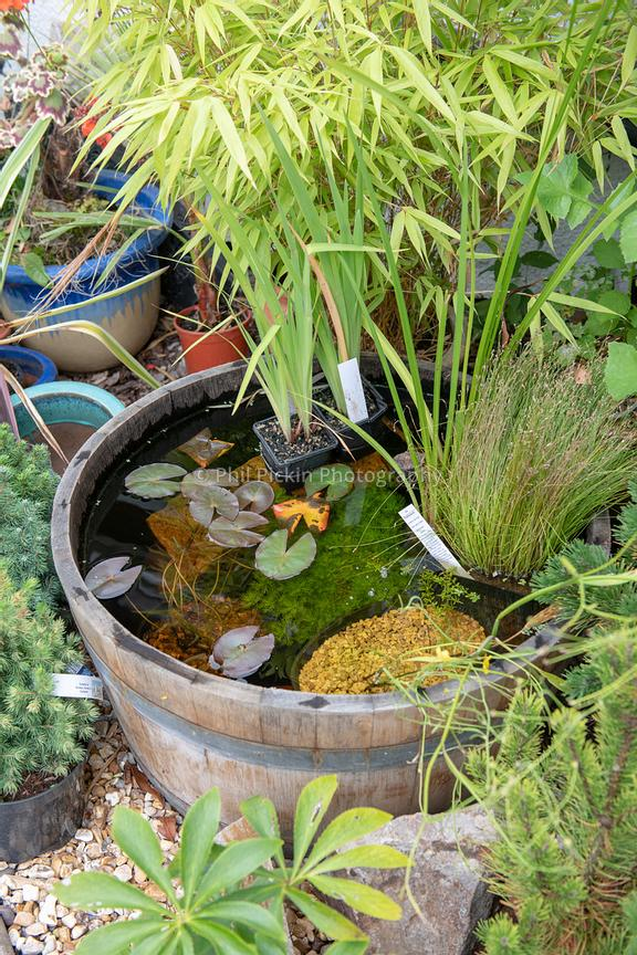 Half barrel has become a wildlife pond.