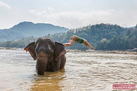 Young woman diving from an elephant in the Mekong