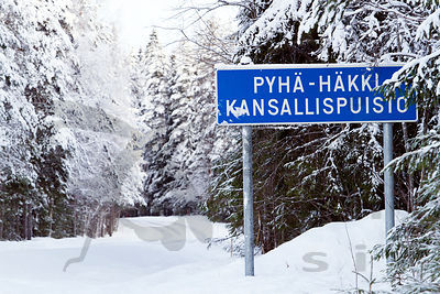 Road Through the Pyhä-Häkki National Park
