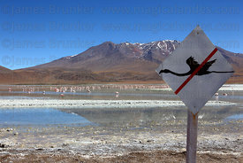 Sign at Laguna Hedionda telling tourists not to scare flamingos to make them fly , Cerro Cañapa volcano in background , North Lipez region , Bolivia