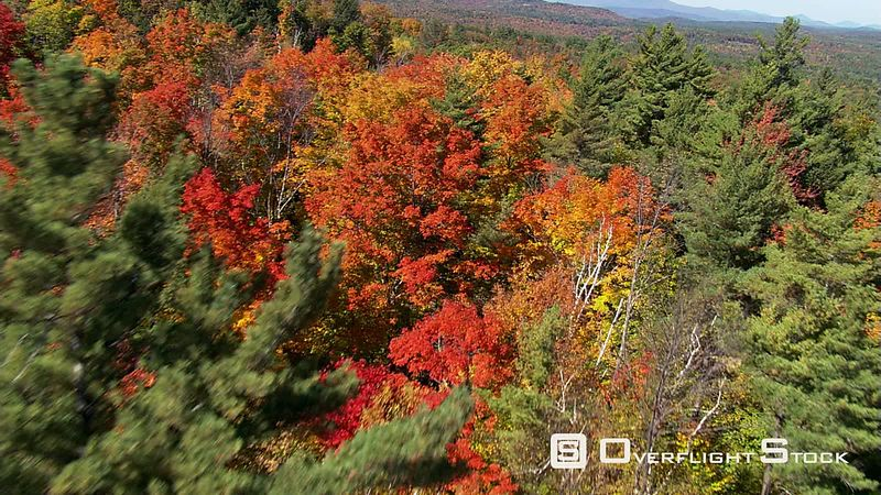 Close flight over mixed forest in fall colors