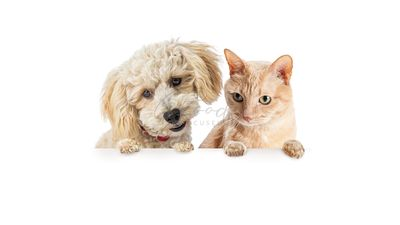 Cat and Dog Looking Doen Over Blank Banner