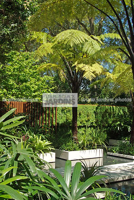 Exotic garden, Tropical garden, Tree Fern