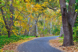 Fall colors in Bidwell Park #6