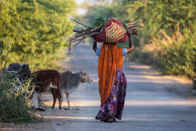 A Woman Carries a Bunch of Wood in a Small Marwari Village