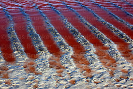 Abstract mud and water patterns on shore of Laguna Colorada, Eduardo Avaroa Andean Fauna National Reserve, Bolivia