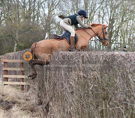 Jumping a hedge near Peake's Covert