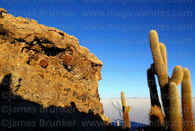 Giant Echinopsis atacamensis (pasacana subspecies) cacti and rock formations with conglomerate on Incahuasi Island, Salar de Uyuni, Bolivia