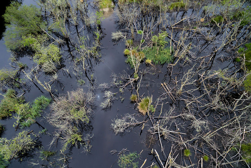 Aerial view overlooking wetland habitat created by European beavers (Castor fiber) in Dubh Loch as part of the Scottish Beaver Trial, Knapdale Forest, Argyll and Bute, Scotland, UK, June 2016.