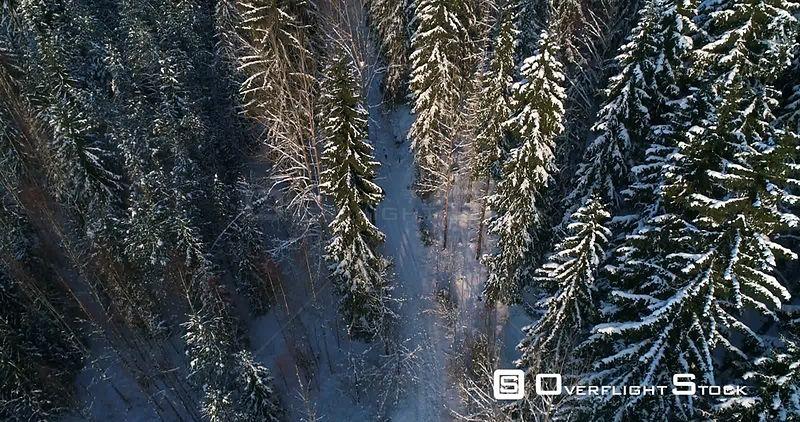 Man Walking a Snowy Forest, 4k Aerial Tilt View of a Young Male, Hiking Between Frozen Trees, Revealing Sipoonkorpi National Park, Freezing Cold Winter Day, Uusimaa, Finland