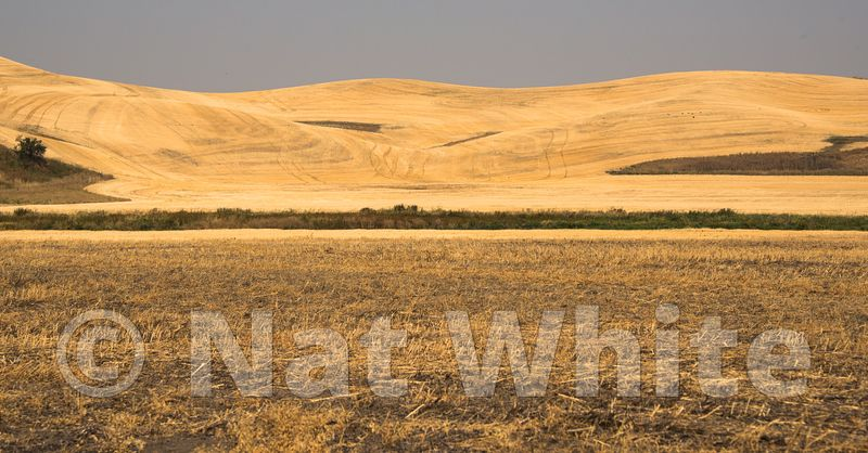 Palouse_-_DSC9245-September_09_2017