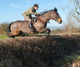 Bruce Langley McKim jumping a hedge near the meet - The Quorn Hunt at Swan Lodge 16/12