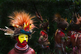 Huli Wigmen from the Tari Valley in the Southern Highlands of Papua New Guinea at a Sing-sing Mt Hagen Papua New Guinea.  Wearing bird of paradise feathers and plumes particularly Raggiana Bird of Paradise plumes (orange plumes) and breast shield of Superb Bird of Paradise