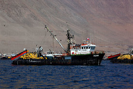 Fishing trawlers moored off desert coast near Iquique , Region I , Chile