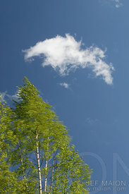 Bright green tree leaves and blue sky