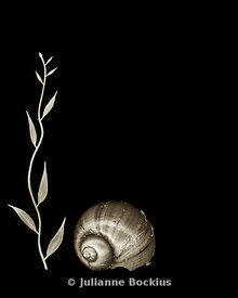 Shell and Plant