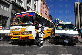 A zebra greets a bus driver at pedestrian crossing, La Paz, Bolivia