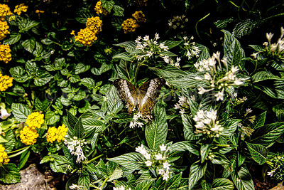 Smithsonian Butterfly Garden- Washington, DC