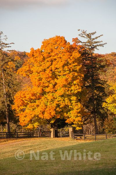 Morven_Park-fall_color-0024_1October_25_2009_