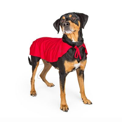 Dog in Super Hero Cape