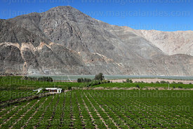 Vineyards and farm building contrasting with desert hillside, Copiapó Valley, Region III, Chile