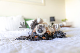 dog sleeping upside down on a bed