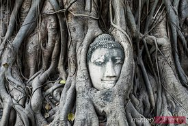 Thailand, Ayutthaya. Famous Buddha head etwined in tree roots, Wat Mahathat, Ayutthaya historical park