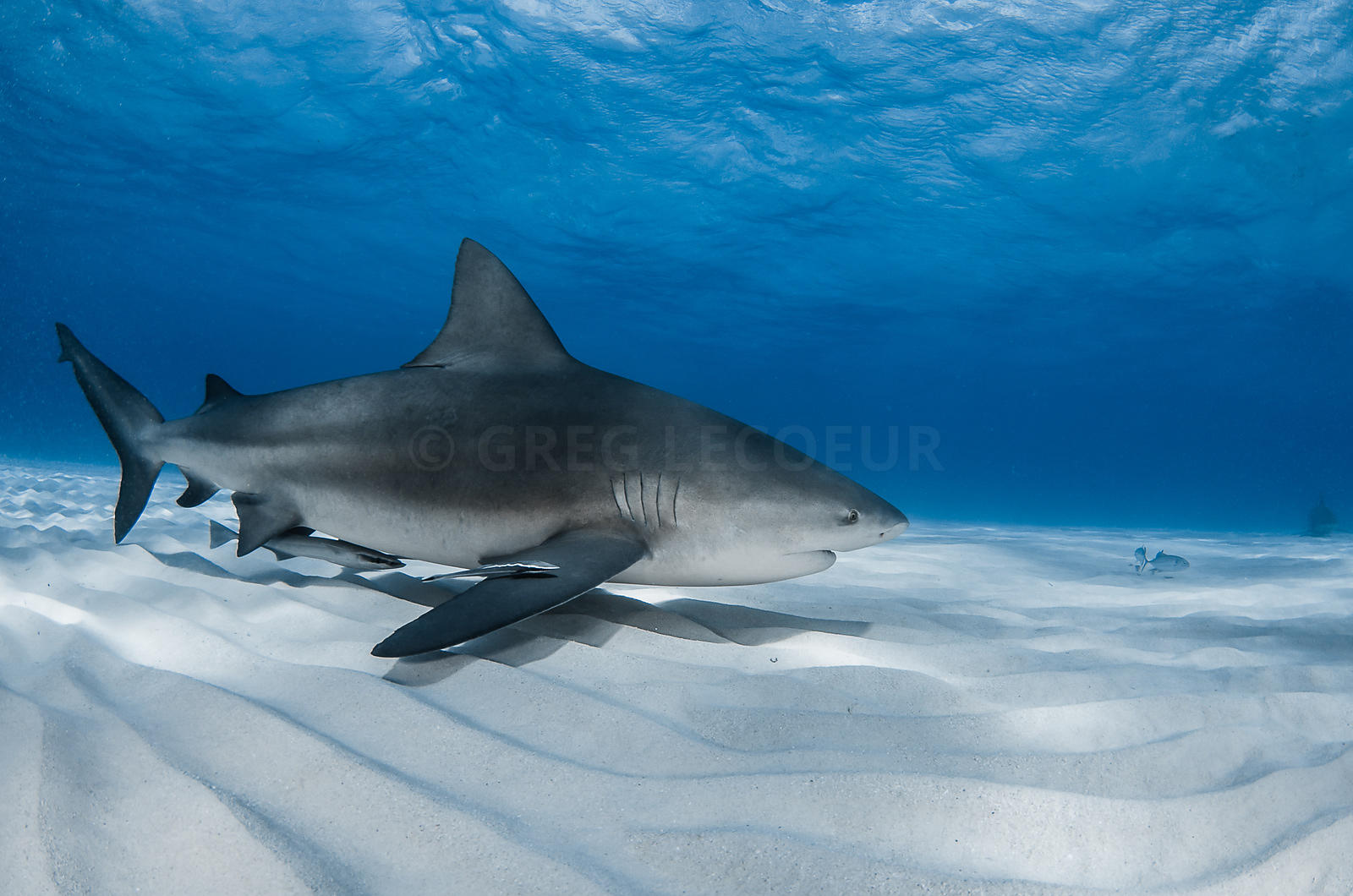 greg lecoeur underwater and wildlife photography