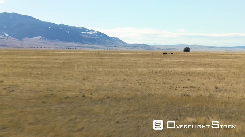 Three horses stand in the holden hay fields in the Madison valley, beneath the Gravelly mountains and Madison mountains in southwestern Montana