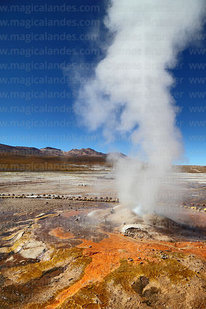 Geyser and geyserite mineral deposits with colourful algae / thermophiles, El Tatio geyser field, Region II, Chile