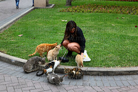 Young woman feeding cats in Parque Kennedy, Miraflores, Lima, Peru