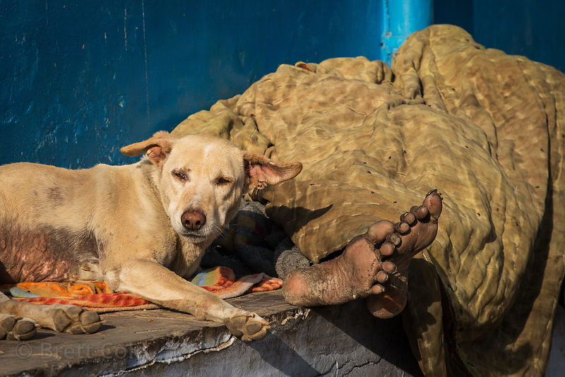 A rough looking street dog sleeps next to an indigent man in Pushkar, Rajasthan, India