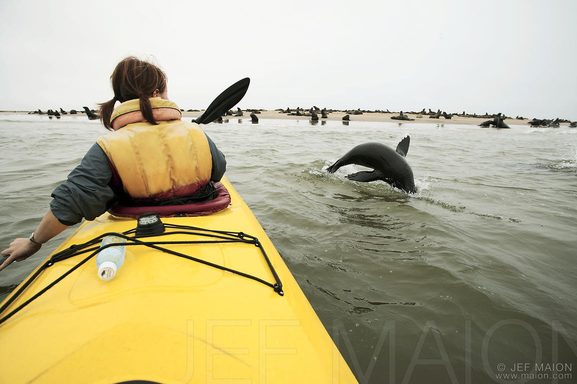 Seal jump by kayak