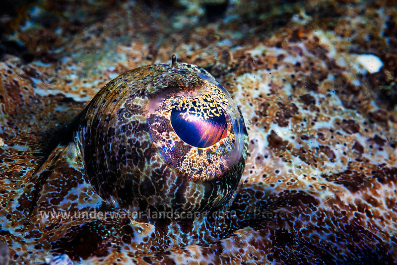 Eye of Crocodilefish