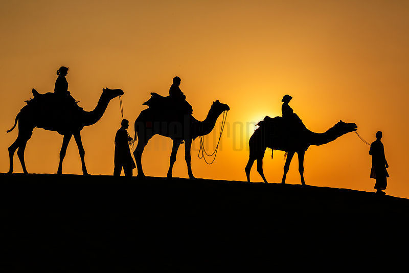 Tourist Riding Camels in the Thar Desert