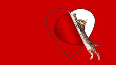 Kitten Cutting Out Valentines Day Heart
