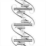 DNA #6 Outline