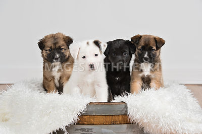 Four puppies sitting in barrel