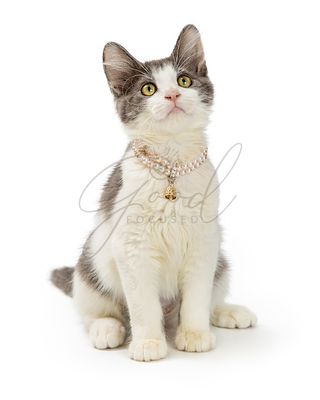 Cute Kitten Wearing Pearl Necklace