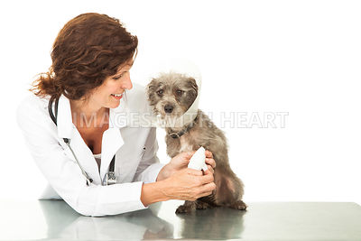 Friendly Female Veterinarian Wrapping Injured Dog Leg