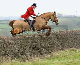 Ashley Bealby jumping a hedge at Wilson's - The Cottesmore Hunt at Manor Farm