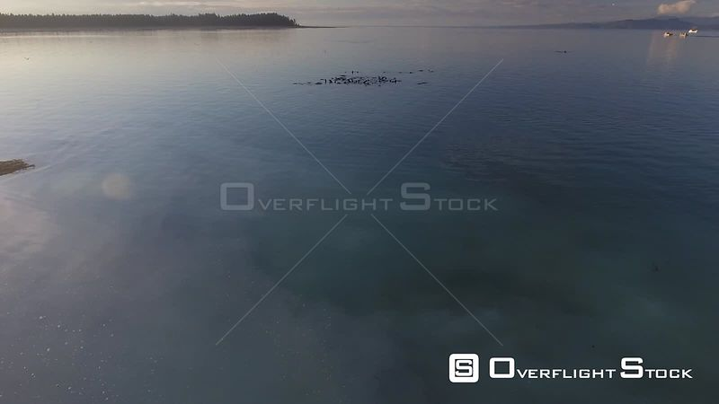 Herring Spawn in the Strait of Georgia BC Canada