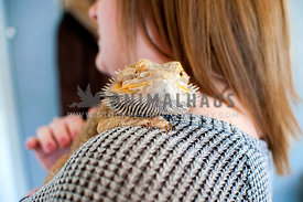 bearded dragon perching on shoulder