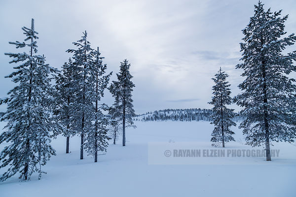 Overcast day in Lapland