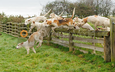 The Cottesmore Hunt at Hill Top Farm 10/12 photos