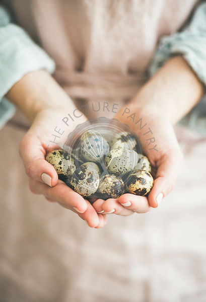 Natural colored quail eggs and feather in woman's hands, close-up